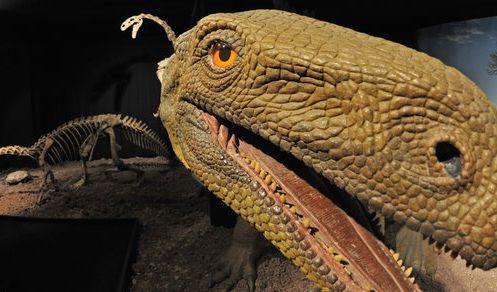 Modell eines Plateosauriers: Die pflanzenfressenden Dinosaurier könnten für eine prähistorische Erde (Foto)