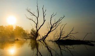 Morgenstimmung an der Oder (Foto)