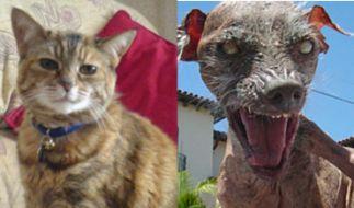 Mussten ihren Titel nach dem Tod abgeben: die älteste Katze und der hässlichste Hund. (Foto)