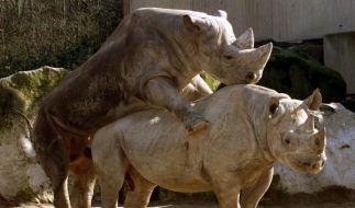 Nashorn-Sex (Foto)