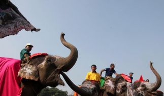 Nepalesische Elefanten auf dem Laufsteg (Foto)