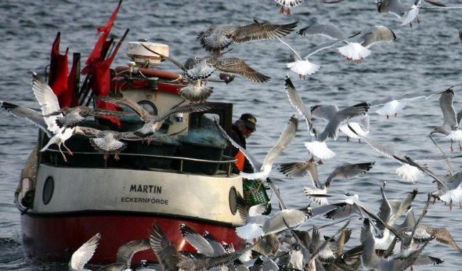 Neuer Greenpeace-Ratgeber: Aal und Rotbarsch sind tabu (Foto)