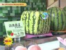 Neuer Trend: Viereckige Melonen!