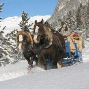 Nicht nur für Romantiker: Eine Fahrt im Pferdeschlitten durch die malerische Winterlandschaft der Schweiz.