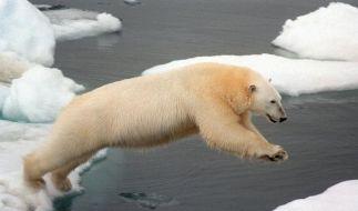 Nicht nur für den Bären wird der Klimawandel zur Gefahr.  (Foto)
