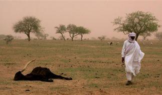 Niger  (Foto)