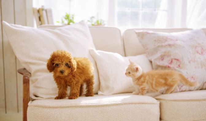 Nintendogs + Cats (Foto)