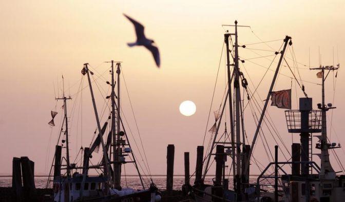 Nordsee-Fischer dürfen mehr Hering fangen (Foto)