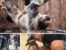 Ob rührend oder unglaublich kurios: Die tierischen Storys haben es in sich. (Foto)