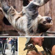 Diese (Tier-)Geschichten sind kaum zu glauben! (Foto)