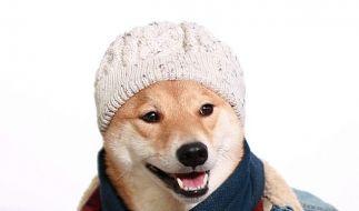 Ob Sommer oder Winter: Hund Bodhi steht einfach jede Mode. (Foto)