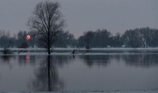 Oderhochwasser  (Foto)