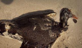 Ölpest vor US-Küste tötete 6000 Vögel (Foto)