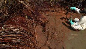 Ölpest (Foto)