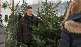 Oh Tannenbaum: Den richtigen Weihnachtsbaum finden (Foto)