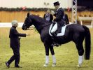Olympia-Aus für Totilas: Reiter Rath krank (Foto)