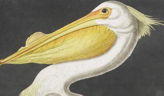 Ornithologisches Werk gilt als «teuerstes Buch der Welt» (Foto)