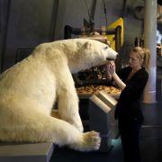 Eisbär voraus: Der präparierte Jäger ist Teil der Dauerausstellung «Erforschung und Nutzung der Meere» im Ozeaneum.
