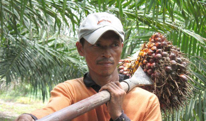 Palmöl (Foto)