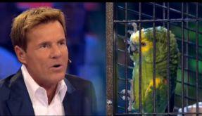 Papagei Jacko beflügelt Dieter Bohlen. (Foto)
