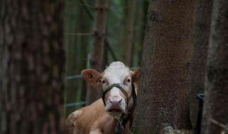 Pause für Yvonne: «Die Kuh steht gut da draußen» (Foto)