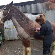 Pferdefriseurin Jillian Scott macht aus einem Pferd auch gerne mal eine Giraffe. (Foto)