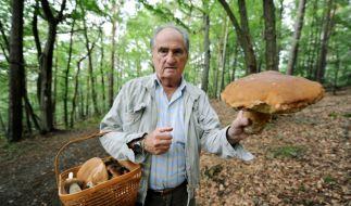 Pilze sammeln (Foto)