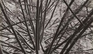Pinakothek zeigt Fotos «Über Bäume und Gestein» (Foto)
