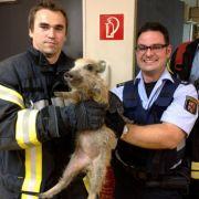 Polizisten und Feuerwehrleute konnten das aufgewühlte Wildschweinchen wieder beruhigen.