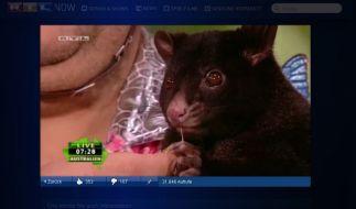 Possum (Foto)