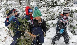 Preise für Weihnachtsbäume könnten steigen (Foto)