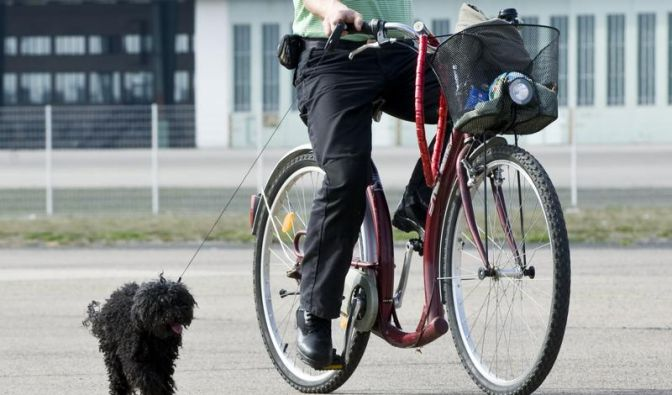 Radeln mit Hund: Tiere müssen ausweichen lernen (Foto)