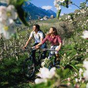 Auf dem Fahrrad den Duft des Frühlings genießen - das wird bei den Deutschen immer beliebter.