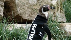 Ralph (Foto)