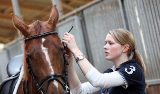 Reitbeteiligung: Ein erster Schritt zum eigenen Pferd (Foto)