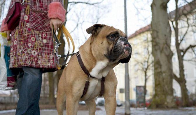 Rheinland-Pfalz plant freiwilligen Tierführerschein (Foto)
