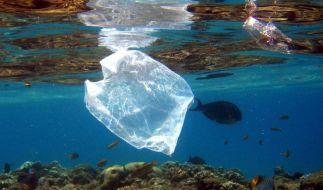 Riesige Mengen Plastik landen jedes Jahr in der Umwelt, wo sie nur sehr langsam abgebaut werden. (Foto)