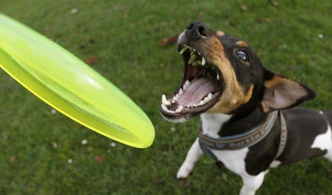Robust und ohne Chemie: Gutes Hundespielzeug finden (Foto)