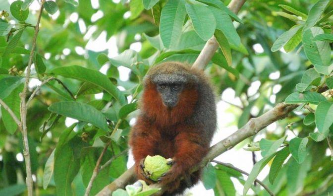 Rote Liste: Zahl der bedrohten Tiere und Pflanzen steigt (Foto)