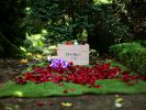 Rote Rosenblätter schmücken die letzte Ruhestätte des Schauspielers Dirk Bach. (Foto)
