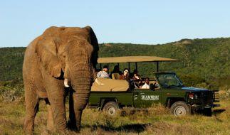 Safari (Foto)