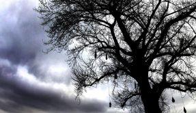 Schauerwetter steht uns bevor (Foto)