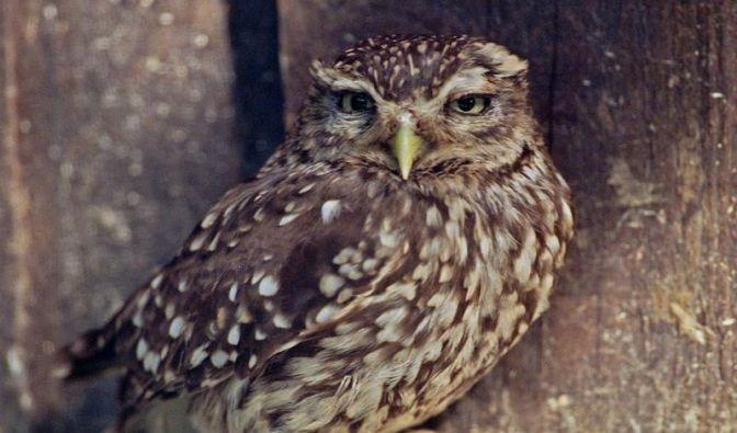 Scheunen für Eulen und Greifvögel offenhalten (Foto)