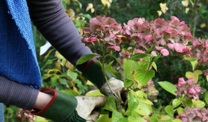 Schimmelpilzallergie durch Gartenarbeit (Foto)
