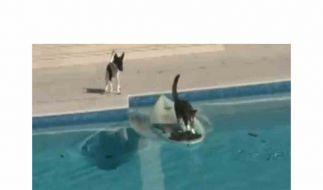 Schlaue Katze, wasserscheuer Hund - das Ende einer tierischen Verfolgungsjagd. (Foto)
