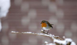 «Schneebücher» zum Schmökern (Foto)