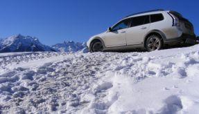 Schneehase (Foto)