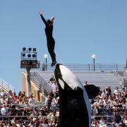 Spionage! SeaWorld hat V-Leute bei Peta eingeschleust (Foto)