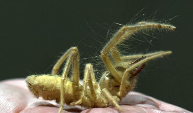 Senckenberg zeigt die Welt der Spinnen (Foto)