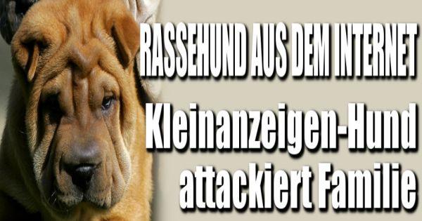 Hundekauf im internet billig hund aus dem internet for Billig leben